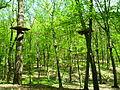 Park linowy, Racibórz 2.JPG