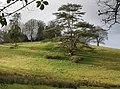 Parkland, Devon Lodge, near Iddesleigh - geograph.org.uk - 1135408.jpg