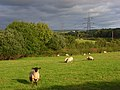 Pastures, Newton Tracey - geograph.org.uk - 964781.jpg
