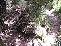 Pedra do Sino trail^ - panoramio.jpg