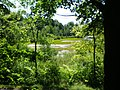 Pelkėta Stelmužės ežero įlanka - panoramio.jpg