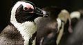 Penguin II (13945308142).jpg