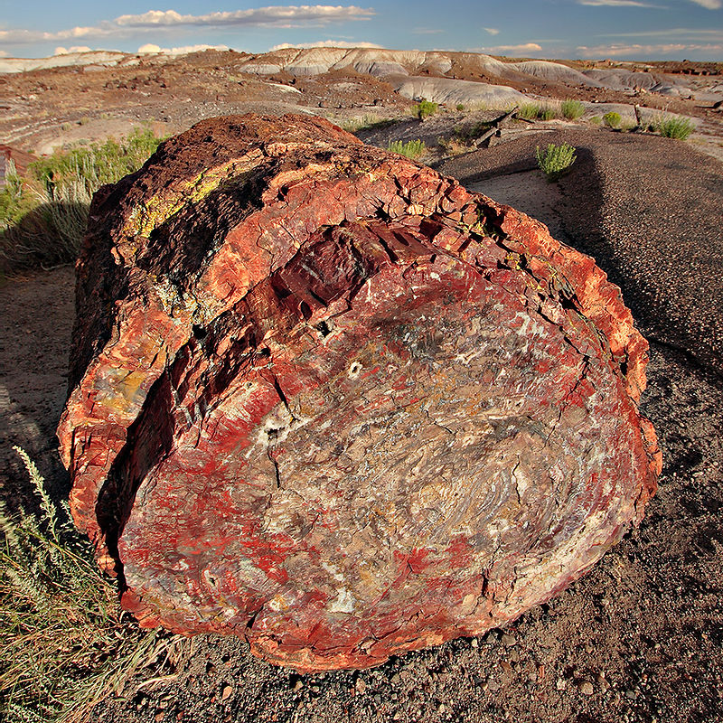Petrified forest log 2 md.jpg