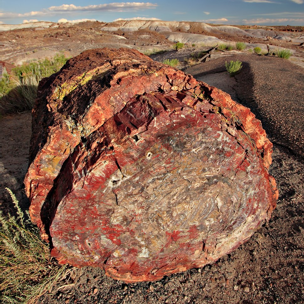 Petrified forest log 2 md