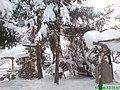 Petrovo Selo - panoramio (33).jpg