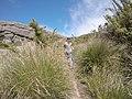 Pico das Agulhas Negras - panoramio (13).jpg