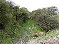 Plateway Cutting Near Hoften's Cross - geograph.org.uk - 780004.jpg