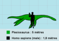 Plesiosauruséchelle.PNG