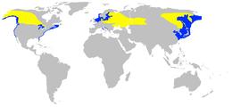 Podiceps grisegena -range map-undistorted