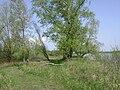 Poland. Gmina Konstancin-Jeziorna. Vistula 028.jpg