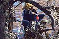 Polkaroo Hiding in the Tree (1971).jpg