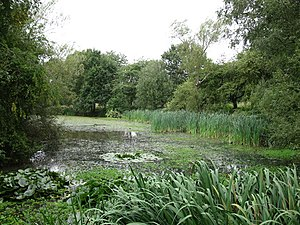 English: Pond at Pope's Meadow Pope's Meadow i...