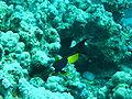 Port Ghalib march 2006-0083.jpg