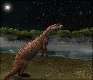 <i>Potamotherium</i> species of mammal