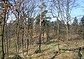 Prague Kunraticky Forest Centr3.jpg