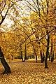 Praha, Holešovice, Stromovka, podzimní listí VI.jpg