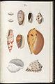 Prodromus in systema historicum testaceorum Tafel 05.jpg