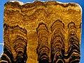 Proterozoic Stromatolites.jpg