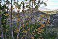 Puig Campana, branques d'arbre.jpg