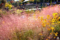 Purple muhly grass at the National Garden (8122449421).jpg