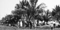 Queensland State Archives 340 The picnic area at Nielson Park Burnett Shire c 1931.png