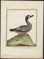 Querquedula discors - 1700-1880 - Print - Iconographia Zoologica - Special Collections University of Amsterdam - UBA01 IZ17600421.tif