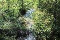 Réserve naturelle Marais Lavours Aignoz Ceyzérieu 33.jpg