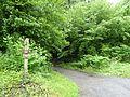 RNR du bois d'Encade dans la Vallée du Marbre (23).jpg