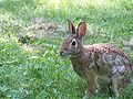 Rabbitty the rabit (no fan club).jpg