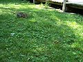 Rabbitty the rabit and fan2.jpg