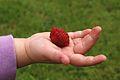 Raspberry on child's hand.jpg