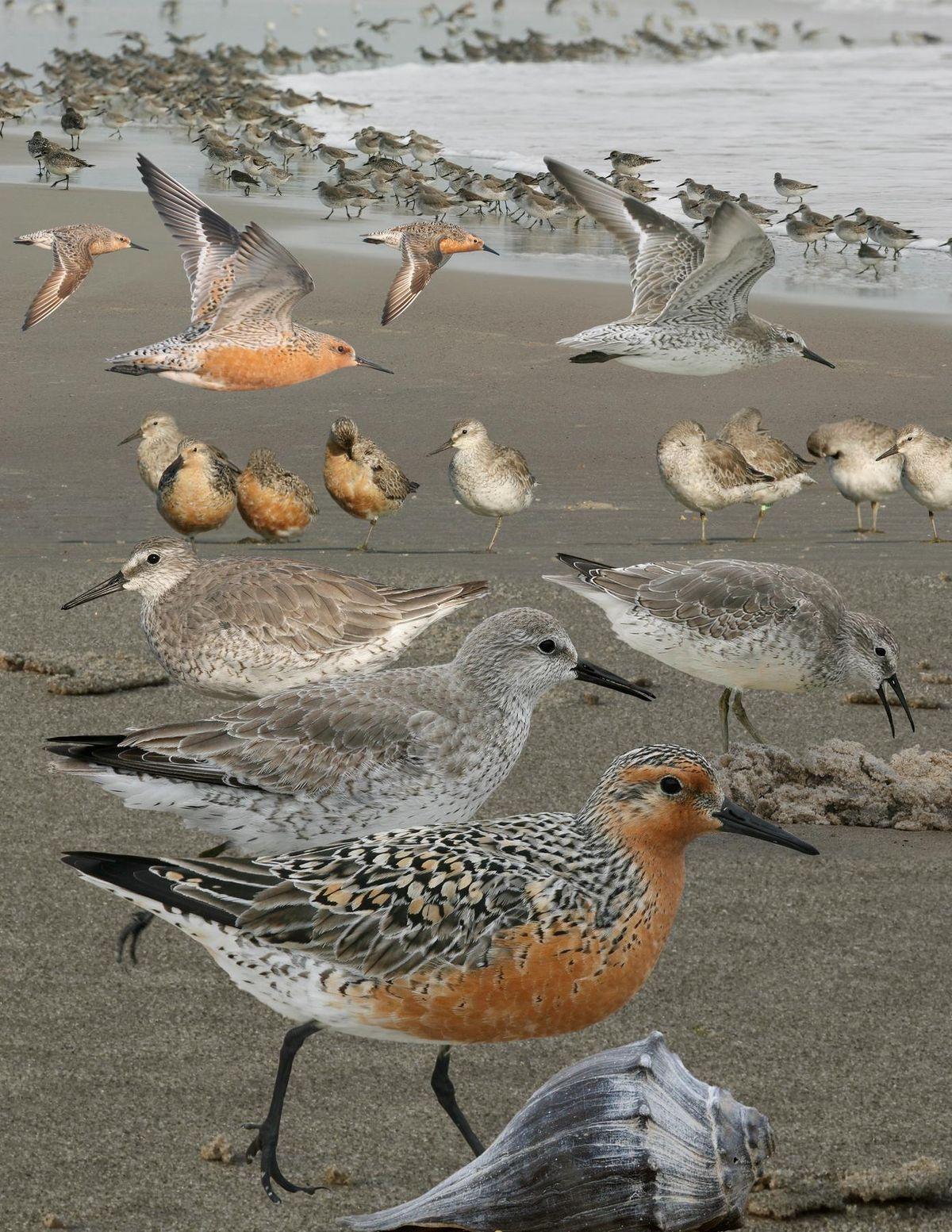A CHECK-LIST OF THE BIRDS OF IDAHO DOC – Kellrimcei2004