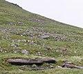 Red deer on Beinn Tarsuin - geograph.org.uk - 1256686.jpg