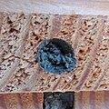 Red mason bee (Osmia bicornis) nest being sealed, Sandy, Bedfordshire (8912352950).jpg