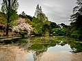 Reflections of Blossoms (40791963195).jpg