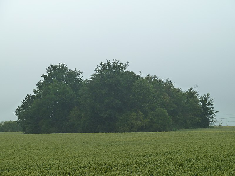 Tumulus de Noville, Fexhe-le-Haut-Clocher/Remicourt, Belgique