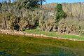 Riu Gorgos amb aigua per Xàbia.JPG
