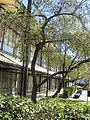 Riverview High School Sarasota.jpg