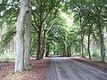 Road, Tentsmuir - geograph.org.uk - 1452390.jpg
