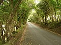 Road Through Cwm Maethlon - geograph.org.uk - 232821.jpg