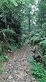 Rocky Path in The Forest on Mount Bunder.jpg