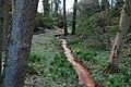 Rombergpark-100331-11445-Lysichiton-americanus.jpg