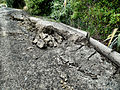 Rupturing of ground - February 22 earthquake Christchurch.jpg