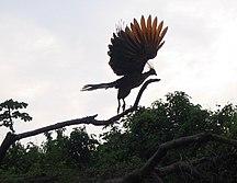 Guyana-Environment and biodiversity-Rurrenabaque Bolivia - The Amazon