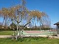 Saint-André-de-Bâgé-FR-01-sport-tennis-01.jpg