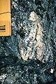 Sally Cove deformed clast in sheared conglom.jpg