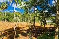 Samaná Province, Dominican Republic - panoramio (54).jpg