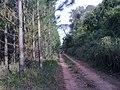 Samora - panoramio.jpg
