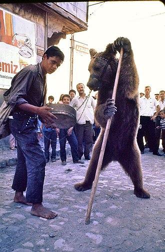 Romani people in Turkey - Image: Samsunlu bir ayı oynatıcısı
