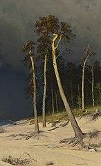 Sandy Coastline